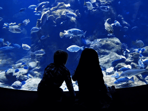 Children watching fish in the aquarium